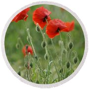 Red Red Poppies 2 Round Beach Towel