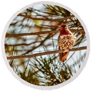 Red Rock Country Hummingbird Round Beach Towel