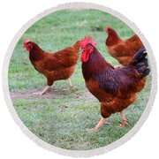 Red Rooster And Hens Round Beach Towel