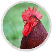 Red Rooster Portrait Round Beach Towel