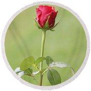 Red Rose Bud 1 Round Beach Towel