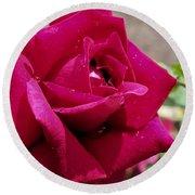 Red Rose Up Close Round Beach Towel
