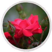 Red Rose 14-1 Round Beach Towel