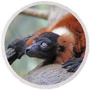 Red-ruffed Lemur Round Beach Towel by Karol Livote
