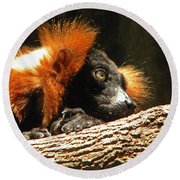 Red Ruffed Lemur Round Beach Towel