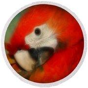Red Scarlet   Macaw Parrot Sammy Round Beach Towel