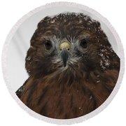 Red Shouldered Hawk Close Up Round Beach Towel