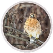 Red-shouldered Hawk Front View Square Round Beach Towel