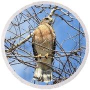 Red Shouldered Hawk In Tree Round Beach Towel