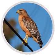 Red-shouldered Hawk On A Wire Round Beach Towel