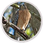 Red-shouldered Hawk On Branch Round Beach Towel
