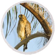 Red-shouldered Hawk On The Palm Tree Round Beach Towel