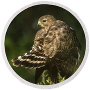 Red-shouldered Hawk Wild Texas Round Beach Towel