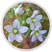 Red-spotted Saxifrage Along Horseshoe Lake Trail In Denali Np-ak  Round Beach Towel