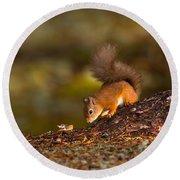 Red Squirrel In Autumn Round Beach Towel