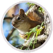 Red Squirrel In The Sun Round Beach Towel