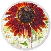 Red Sunflower Glow Round Beach Towel