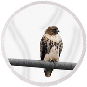 Red Tail Hawk On Light Pole Round Beach Towel