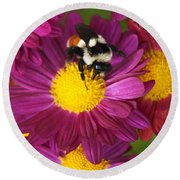 Red-tailed Bumble Bee Round Beach Towel
