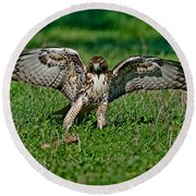 Red-tailed Hawk & Gopher Snake Round Beach Towel
