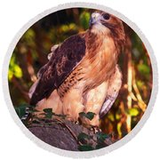 Red Tailed Hawk - 53 Round Beach Towel