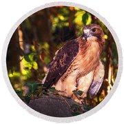Red Tailed Hawk - 54 Round Beach Towel