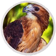 Red Tailed Hawk - 66 Round Beach Towel