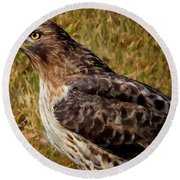 Red Tailed Hawk Close Up Round Beach Towel
