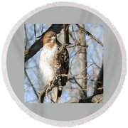 Red-tailed Hawk Looking Round Beach Towel