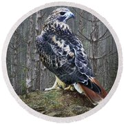 Red Tailed Hawk Perched On A Rock Round Beach Towel