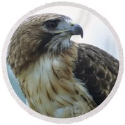 Red-tailed Hawk Profile Round Beach Towel