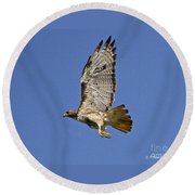 Red-tailed Hawk Takeoff Round Beach Towel