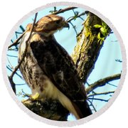 Red Tailed Interest Round Beach Towel