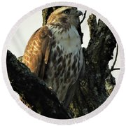 Red Tailed Morning Round Beach Towel