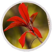 Red Ti Leaves Round Beach Towel