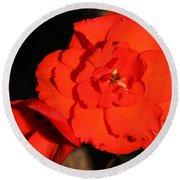 Red Tuberous Begonia Flower Round Beach Towel