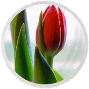 Red Tulip Day 1 Round Beach Towel