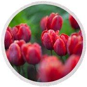 red tulips II Round Beach Towel