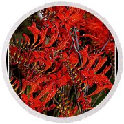 Red Devils Tongue Vine Vertical Round Beach Towel