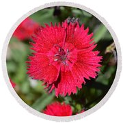 Red Winery Flower Round Beach Towel