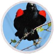 Red Wing Blackbird 1 Round Beach Towel