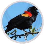 Red Wing Blackbird 2 Round Beach Towel