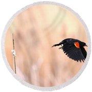Red-wing Blackbird In Flight Round Beach Towel