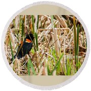 Red-wing Hiding Round Beach Towel