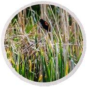 Red-winged Black Bird In The Cattails Round Beach Towel