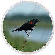 Red-winged Blackbird Landscape Round Beach Towel