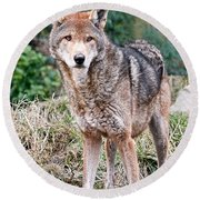 Red Wolf Alert Round Beach Towel