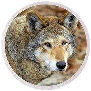 Red Wolf Portrait Round Beach Towel
