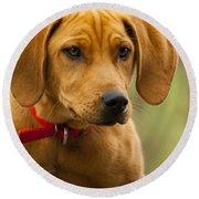Redbone Coonhound - Man's Best Friend The Hound Dog Round Beach Towel