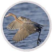 Reddish Egret Dance Fishing Round Beach Towel